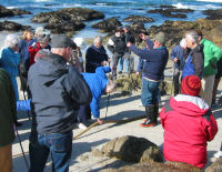 PBK Tidepooling - Photo by Jud Goodrich